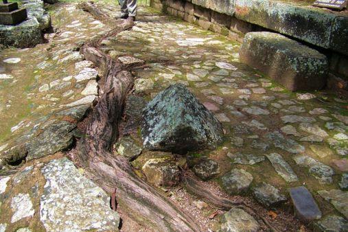 Ruinas de Copan (76)