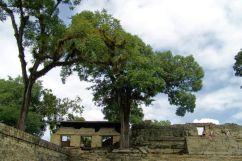 Ruinas de Copan (85)