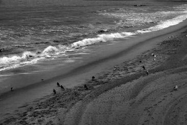 Santa Monica Beach (10)