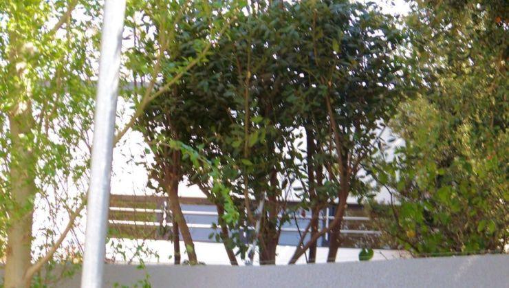 Soweto 06 (huis van Desmond Tutu)