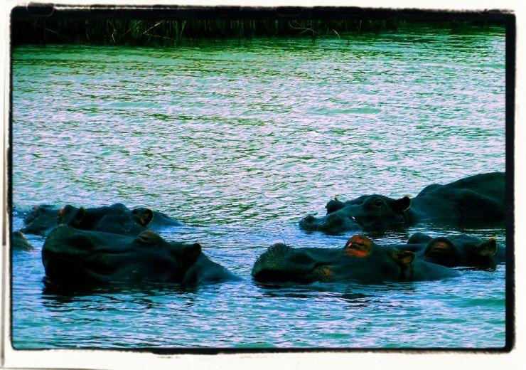 St.-Lucia estuarium 08 - kopie