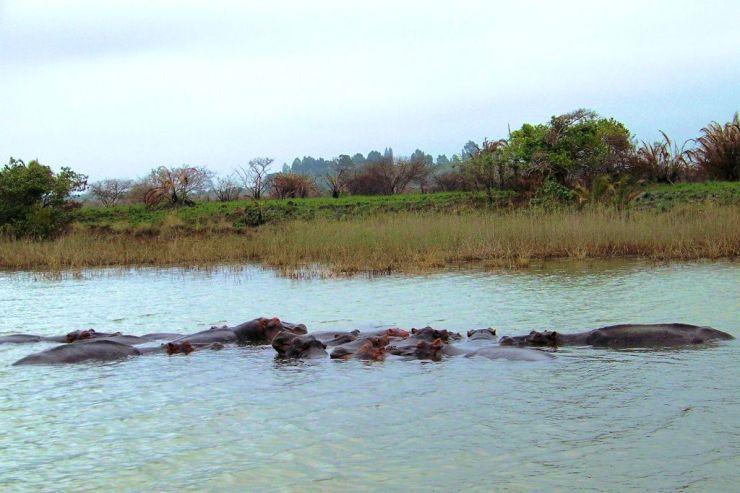 St.-Lucia estuarium 09