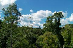 Tikal (15)
