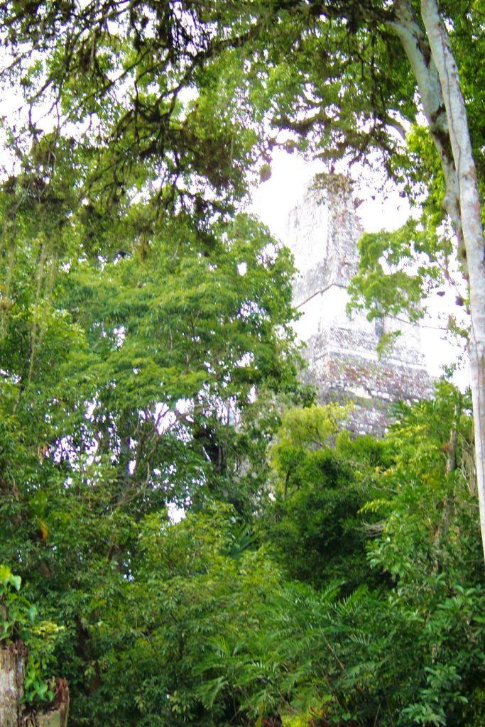 Tikal (19)