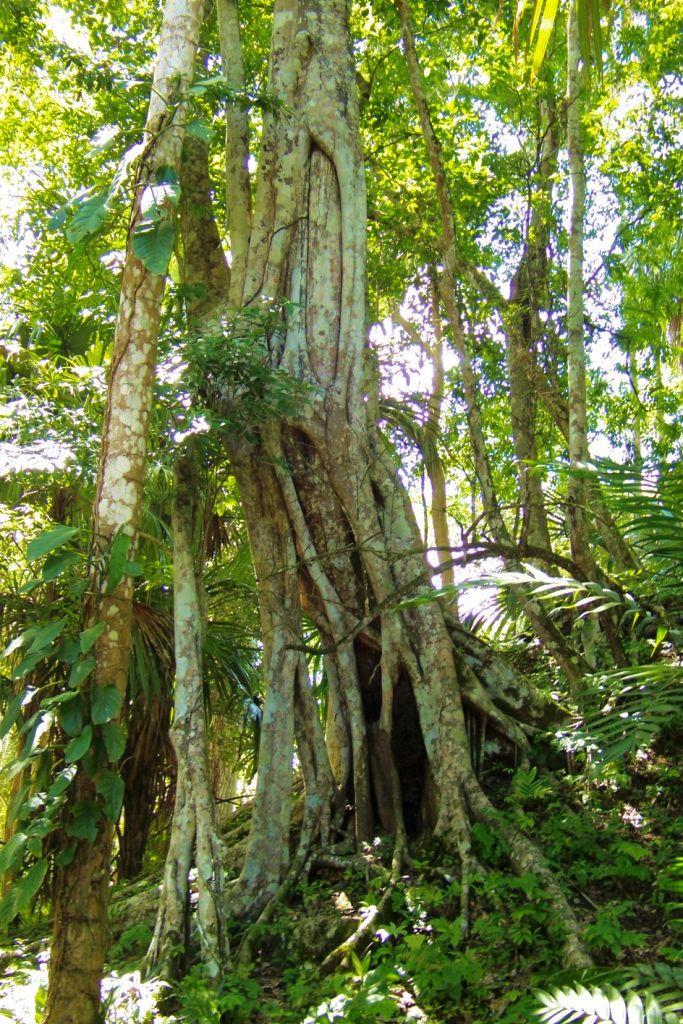 Tikal (59)