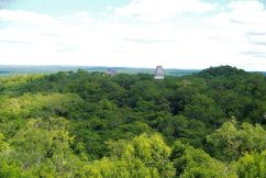 Tikal (66)
