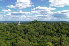 Tikal (70)