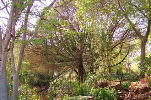 Voortrekkermonument 17 (tuin)