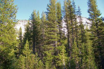 Yosemite NP (101)