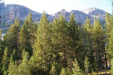 Yosemite NP (102)