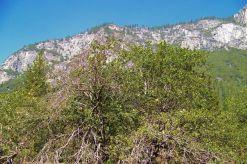 Yosemite NP (14)