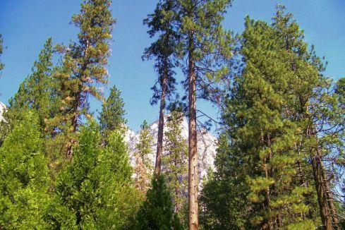 Yosemite NP (20)