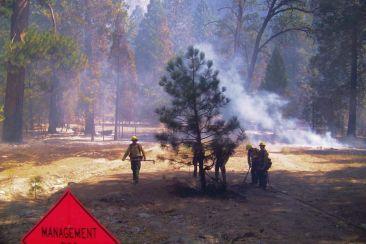 Yosemite NP (24)