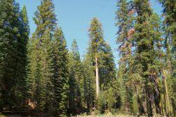 Yosemite NP (30)