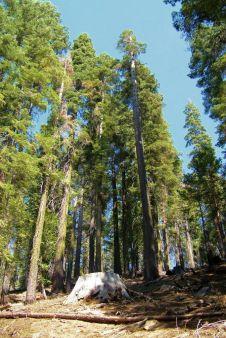 Yosemite NP (31)