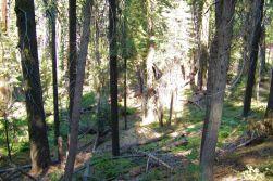 Yosemite NP (32)