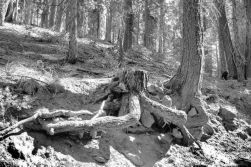 Yosemite NP (33)