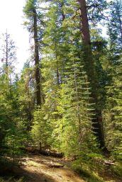 Yosemite NP (34)
