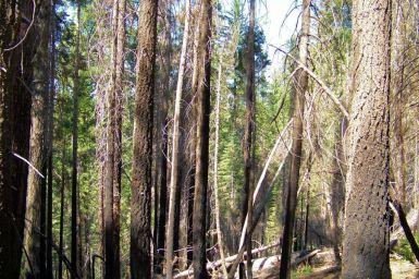 Yosemite NP (35)