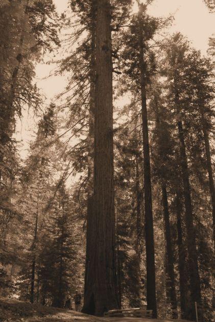 Yosemite NP (37)