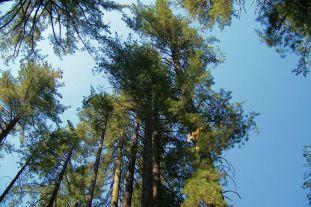 Yosemite NP (38)