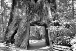 Yosemite NP (42)
