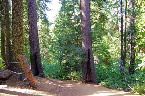Yosemite NP (43)