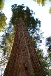 Yosemite NP (48)