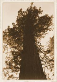 Yosemite NP (49)