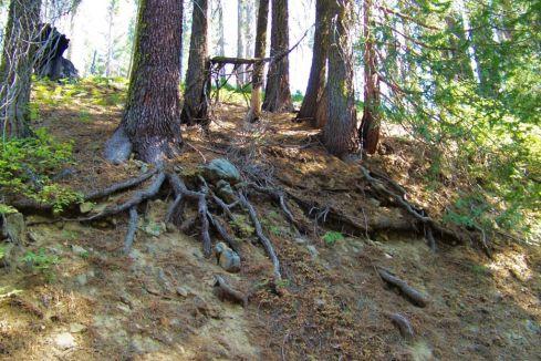 Yosemite NP (51)
