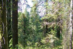 Yosemite NP (52)