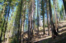 Yosemite NP (54)