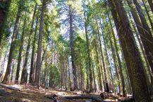 Yosemite NP (55)