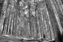 Yosemite NP (56)