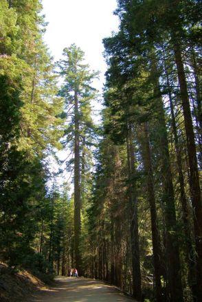 Yosemite NP (57)