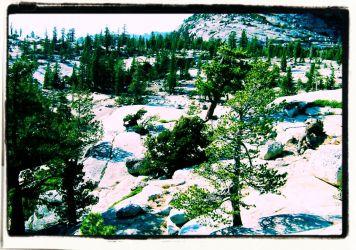 Yosemite NP (72)