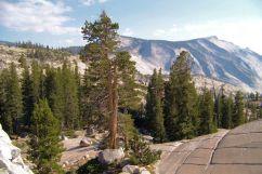 Yosemite NP (76)