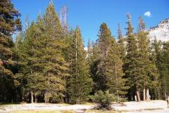Yosemite NP (98)