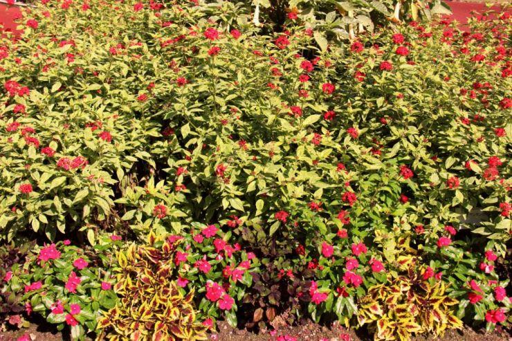 botanical-garden-1