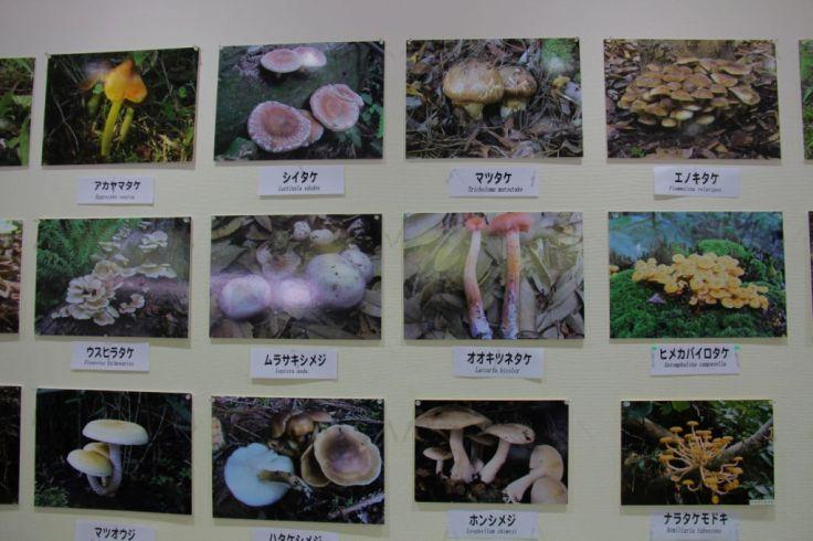 botanical-garden-12