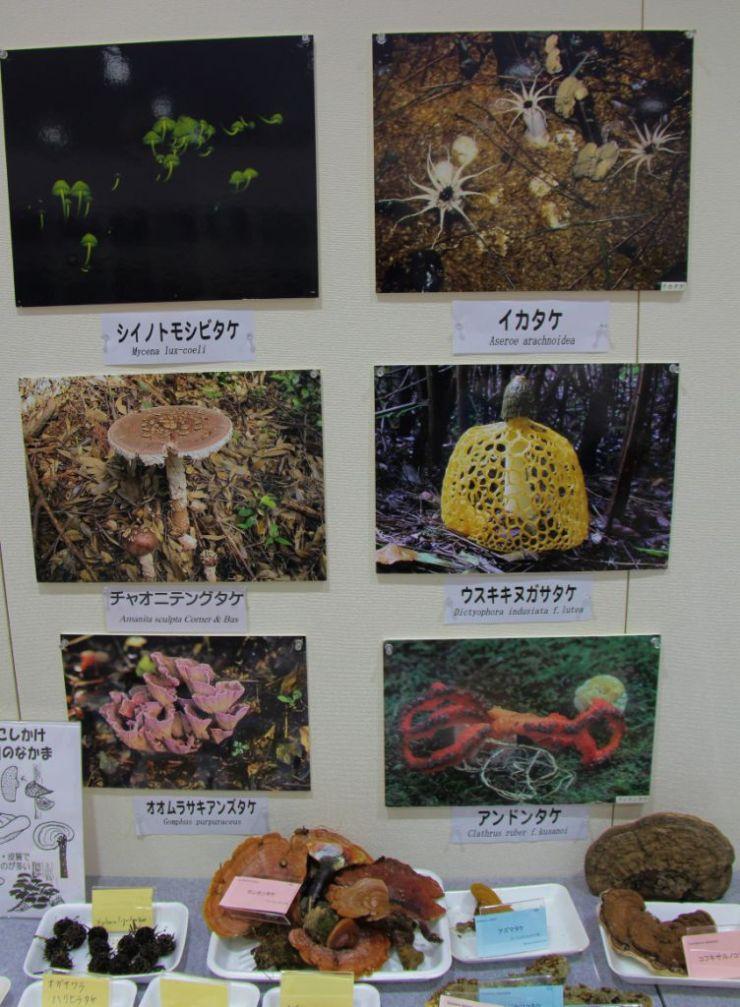 botanical-garden-14