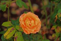 botanical-garden-16