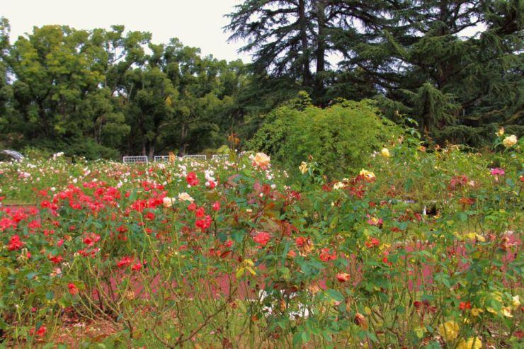 botanical-garden-17