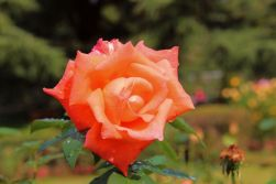 botanical-garden-19