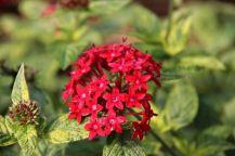 botanical-garden-2