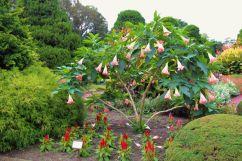 botanical-garden-27