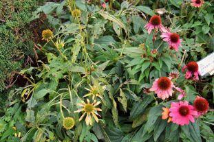 botanical-garden-29