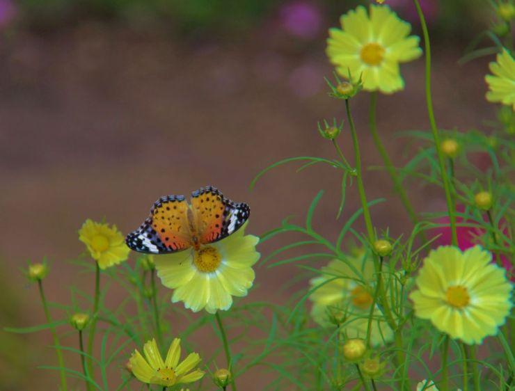 botanical-garden-3