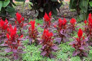 botanical-garden-31