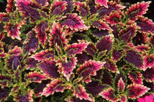 botanical-garden-34